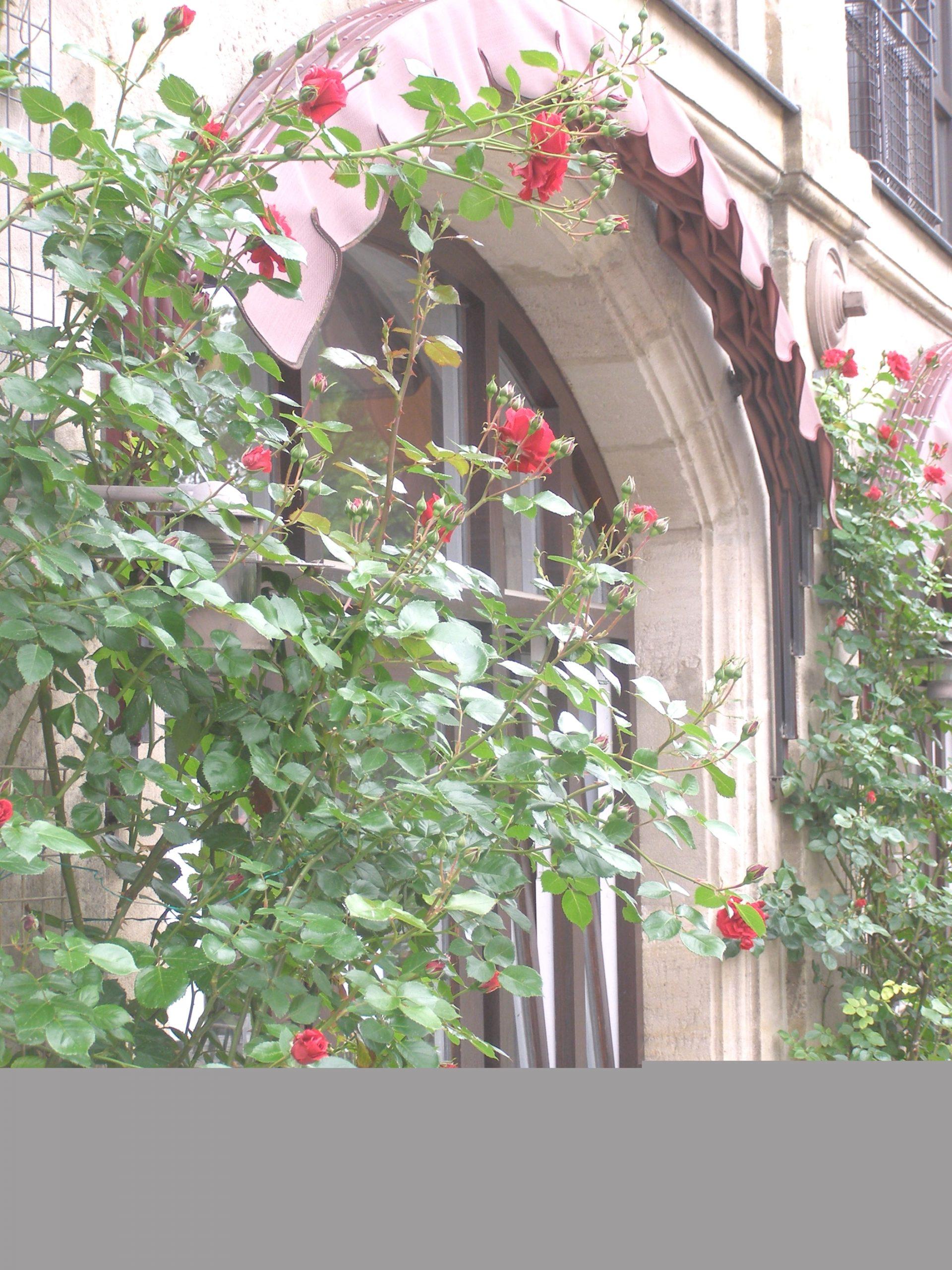 Rosenbogenfenster